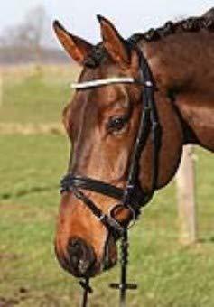 Hans Melzer Horse Equipment Trense Beedenbostel