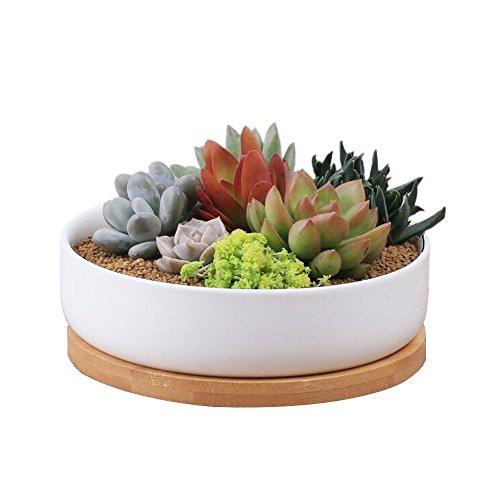 Y&M Pflanzschale für Sukkulenten und Kakteen, weiße Keramik, modern und dekorativ, 15,2 cm, rund