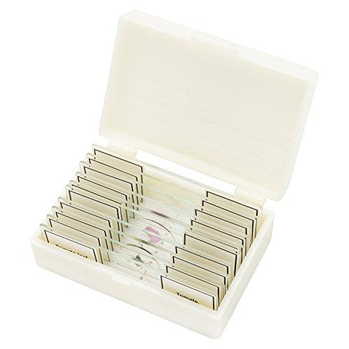 Bresser 5984500 Profi-Qualität Dauerpräparate für Mikroskop (10 Stück) durchsichtig