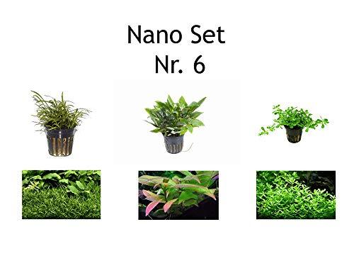 Tropica Nano Set mit 3 Einfachen Kleinen Topf Pflanzen Aquariumpflanzenset Nr.6 Wasserpflanzen Aquarium Aquariumpflanzen