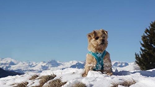 CURLI Brustgeschirr Plush Vest AIR-MESH black für Hunde S (35 - 40 cm)