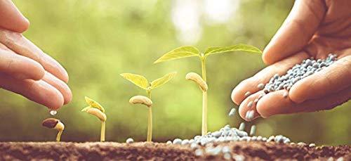25 kg NPK 15-15-15 Volldünger Leistungsstarker Unviversal-Dünger mit Schwefel & Langzeitwirkung • für Rasen Obst & Gemüse Blumen • Perfekt für die Grundversorgung aller Böden/TerraDomi