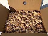10kg BBQKontor Premium Anzünder aus Holzwolle & Wachs - Grillanzünder Kaminanzünder Ofenanzünder Brennholzanzünder Kaminholzanzünder Holzanzünder Anzündkamin Grill Grillkohle Holzkohle Briketts