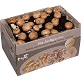 Große 7kg Steinchampignon Pilzkultur - Pilze zum selber züchten - ohne Vorkentnisse