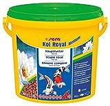 sera KOI Royal medium (4 mm) ein Koifutter bzw. Hauptfutter für die optimale Entwicklung von Koi von 12- 25cm mit Präbiotika für verbesserte Futterverwertung, geringere Wasserbelastung & weniger Algen