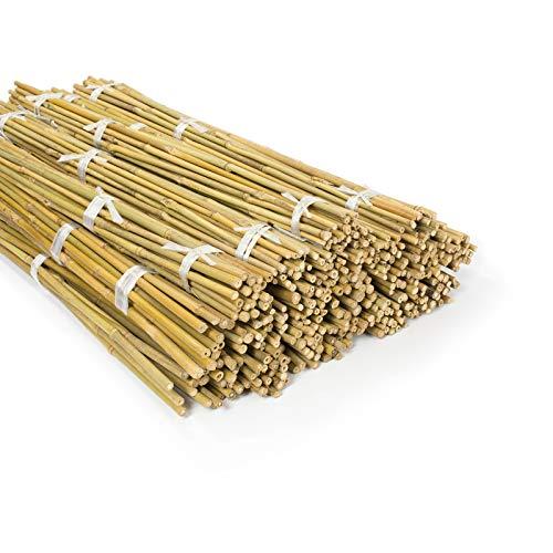 casa pura Bambusstäbe Bahia in Gärtner-Qualität | Bambus Rankhilfe Pflanzenhalter Pflanzstab Rankstab | Verschiedene Längen und Sets (150 cm Länge, 60 Stück)
