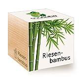 Feel Green Ecocube Riesenbambus, Nachhaltige Geschenkidee (100% Eco Friendly), Grow Your Own/Anzuchtset, Pflanzen Im Holzwürfel, Made in Austria
