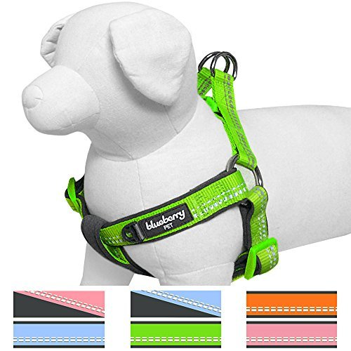 Blueberry Pet Step-in' Geschirre Neu 3M Reflektierend 40-50cm Brust Sommer Pastell Baby-Grün Verstellbares Zugentlastendes Gepolstertes Hundegeschirr, Passendes Halsband Separat Erhältlich