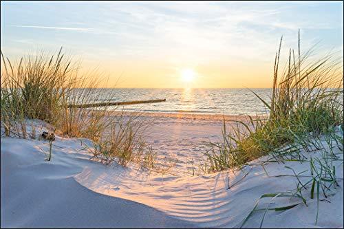 Muralo Fototapete Strand Meer Dünen 240 x 360 Vlies Pflanzen Sonne Ufer - 788833822