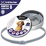Dewel Zeckenhalsband, Zecken Halsband mit 8 Monate Kontrolle Schutz für Hunde Katzen, Verstellbar Größe und Wasserfest,Anti-Zecken und Anti-Flöhe