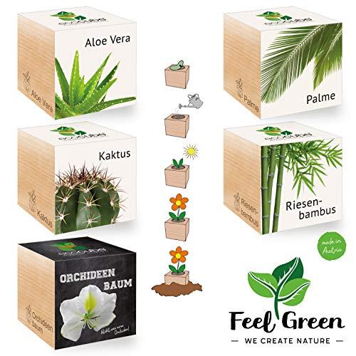 Ecocube Exotics-Set Mit 5 Sorten – 25% Sparen Im Paket, Pflanzen Im Holzwürfel, Nachhaltige Geschenkidee, Grow Your Own/Anzuchtset, Made In Austria