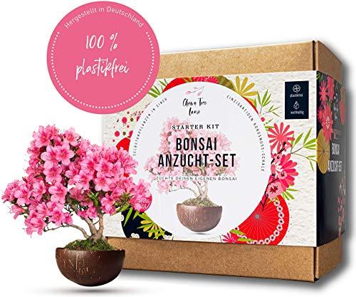 Bonsai Starter Kit inkl. Kokosschale - ökologisches Bonsai Kit - Züchte deinen eigenen Bonsai - Zwei einzigartige Bonsai Bäume im Bonsai Anzuchtset & Samen - ideal für Anfänger - tolles Geschenk