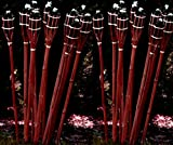 24 Stück Gartenfackel Bambusfackel 90 cm in Mahagoni Farbe aus Bambus für draussen inkl Docht + Tank / Ölfackel Gartenfackel Lampe Öllampe Gartenfackeln / STAR-LINE