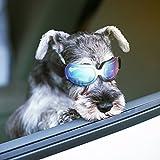 Namsan Sonnenbrille Hund hundebrille für Kleine Hunde Einstellbare Komfortabel UV-schutzbrille