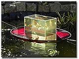 Flying-Aquarium-Oval'Hover' 2500 rot Beobachtungsbecken für Teichfische Teichbedarf Gartenteich Koi