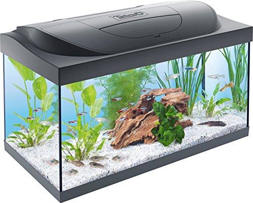 Tetra Starter Line Aquarium-Komplettset mit LED-Beleuchtung stabiles 54 Liter Einsteigerbecken mit Technik, Futter und Pflegemitteln