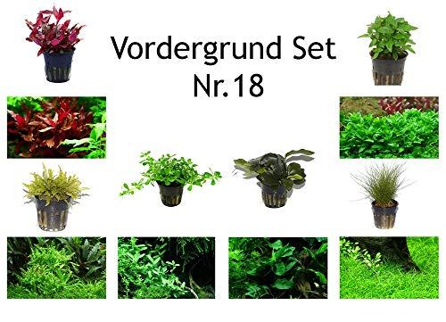 Tropica Vordergrund Set mit 6 Topf Pflanzen Aquariumpflanzenset Nr.18 Wasserpflanzen Aquarium Aquariumpflanzen