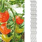 10x Tomatenspiralstab 180cm voll verzinkt Tomatenstab Tomaten Ranke Pflanzstab Stahl Profi Qualität ( 1-50 Stück ) Tomatenspiralstäbe