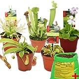 Starter Set Fleischfressende Pflanzen - 5 Pflanzen + Erde - Karnivorenerde