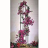 Rankhilfe Rosenbogen Obelisk Rosensäule Garten Deko für Rankpflanzen Rosengewächse Maß: 190cm / 160cm x 40cm Farbe dunkelgrün oliv Rankgitter iapyx