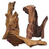 Wurzel Mangrovenwurzel Holz Treibholz für Terrarium Aquarium Zubehör Garten Deko Reptilien Echtholz 40 - 80 cm 100 % Natur *alles Einzelstücke*