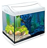 Tetra AquaArt Discovery Line LED Aquarium-Komplett-Set 20 Liter weiß (inklusive LED-Beleuchtung, Tag- und Nachtlichtschaltung, Innenfilter und Aquarienpumpe, ideal für Garnelen)