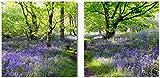 Wallario Wand-Bild 70 x 100 cm | Motiv: Blaues Hasenglöckchen im Wald | Direktdruck auf 5mm Starke Hartschaumplatte | leichtes Material | günstig