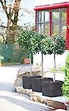Pflanztopf Kubus quadratisch anthrazit aus Kuststoff (40 x 40 cm)
