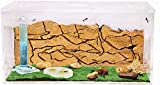 AntHousees Ameisenfarm Starterkit (Ameisen mit Königin Free) - New Educational Ant Farm - Formicarium for LIVE Ants