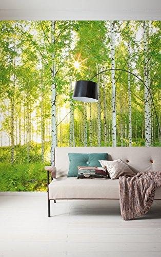 Komar - Vlies Fototapete SUNDAY - 300 x 250 cm - Tapete, Wand Dekoration, Birkenwald, Wald, Natur, Landschaft - 519-DV3