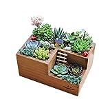 Holzgarten Sukkulenten Pflanzgefäß Container Box, Fächer Divider für Kunsthandwerk Blumen Pflanzen Schmuck Sukkulenten Blume Moos Aufbewahrungsbox