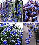 Exotische Blumensamen Himmel blau Blumengarten Kletterrose Pflanze Ziergarten Bonsai Topf Planta Leicht 200pcs wachsen/bag