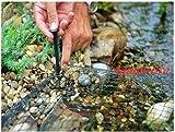 Pondpro Teichabdeckung in Netzform 3m x 2m Schützen Fische Teichnetz Katzen Blätter Heron