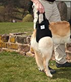 Hunde Tragehilfe L schwarz / Hunde Gehhilfe / Hunde Rehahilfe, das Hilfsgeschirr für Probleme an der Wirbelsäule, der Hüfte und den Knien ihres Hundes.