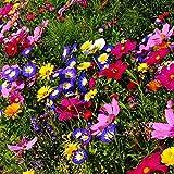 MEIGUISHA Gartensamen- 100 PCS Selten Wildblumen Blumen mischung Schmetterling & Biene freundlich Mix Wiese Samen Mehrjährige Pflanzensamen winterhart Samen