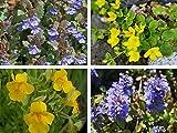 Wunderschönes Randpflanzensortiment 4 Töpfe Bodendeckersortiment Bodendecker
