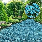 AIMADO Samen-100 Pcs Bodendecker 'Blauer Stern' Samen,Schnellwachsender, duftender Bodendecker mehrjährig winterhart Blumensamen Saatgut für Steingarten