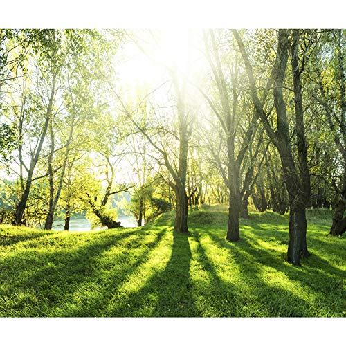 decomonkey Fototapete Wald 350x256 cm XL Tapete Wandbild Bild Fototapeten Tapeten Wandtapete Wandtapeten Natur Landschaft Baum