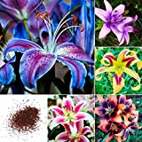 Qulista Samenhaus - 50pcs Selten duftend Oriental Lilien Mischung Blumensamen Mischung winterhart mehrjährig, geeignet für Garten/Kübel auf Balkon & Terrasse