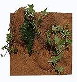 reptiles-planet natur Pflanzen Hintergrund für Terrarium, 20x 30x 1cm