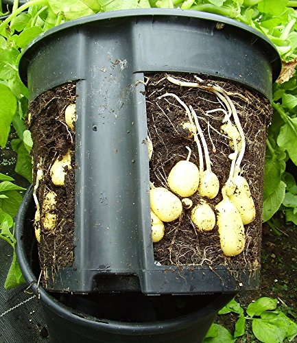 PotatoPot Kartoffel-Pflanztopf, Kübel für Pflanzkartoffeln auf Balkon & Terrasse