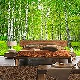 Fototapete 400x280 cm - ALLE TOPSELLER auf einen Blick ! Vlies PREMIUM PLUS - SUNNY BIRCH FOREST - Birkenwald Bäume Wald Sonne Birkenhain Birke Birken Gras Natur Baum - no. 112