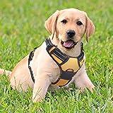 Rabbitgoo No-Pull-Hundegeschirr einstellbar weich Hundegeschirr Haustier einfach sicher Kontrolle Körper bequem Hunde Leine für kleine Hunde Orange S
