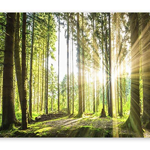 murando - Fototapete selbstklebend Wald 3D 343x256 cm decor Tapeten Wandtapete klebend Klebefolie Dekofolie Tapetenfolie - Landschaft Natur Sonne Grün Bäume Sonnenuntergang c-B-0098-a-b