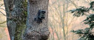 An einem Baum hängt eine getarnte Wildkamera.